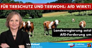 Iris Nieland (AfD) zum Verbot von Langstreckentiertransporten in RLP: AfD wirkt!